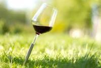 Rượu vang chile nào ngon nhập khẩu tại Hà Nội và TPHCM