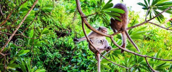 Halong Bay - Cat Ba Monkey Island Resort - Kayaking - Lan Ha Bay 4Day/3Night